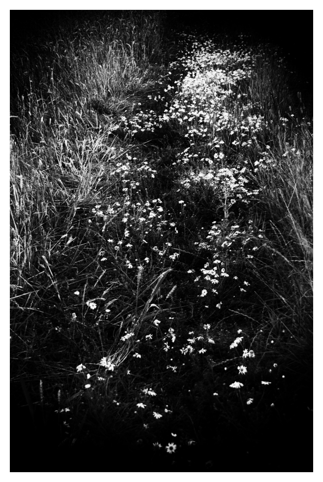 white-flower-path